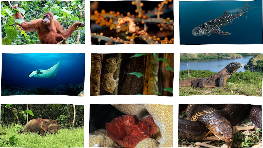 tiere-indonesien-titelbild