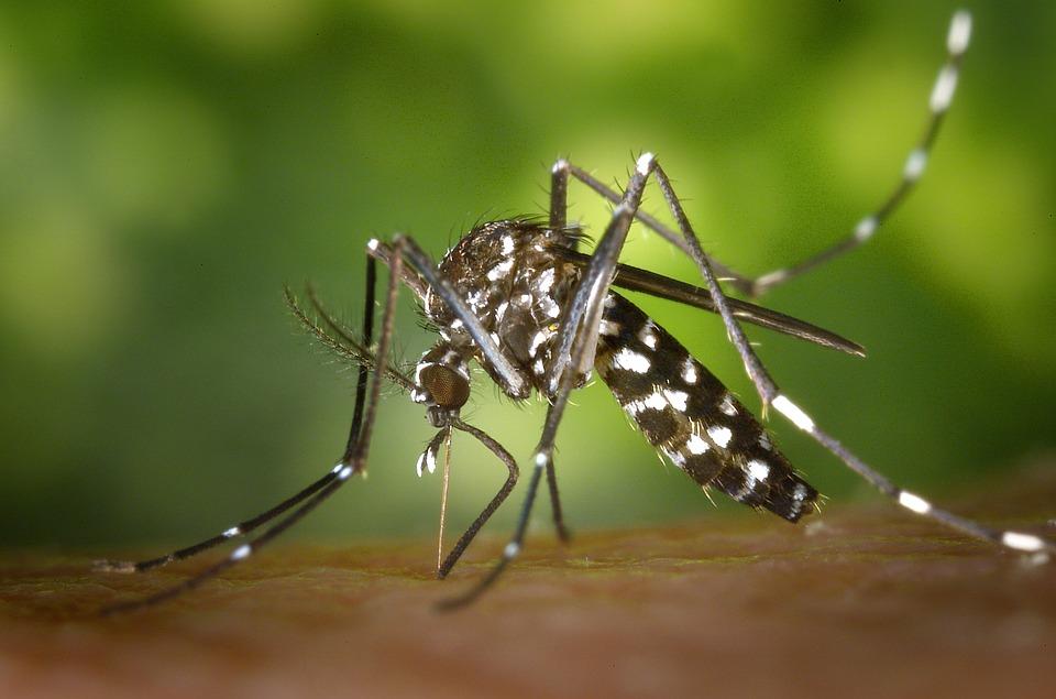 tigermuecke-indonesien-dengue