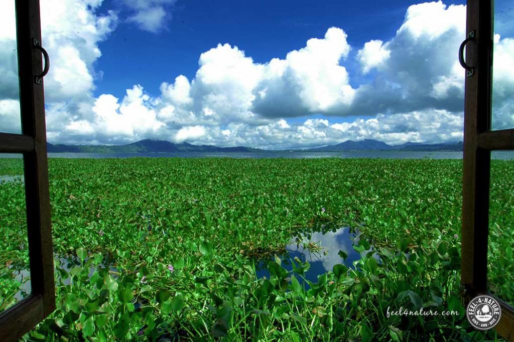 tondano-seegrass