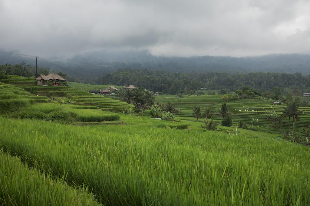 touren-bali-jatiluwih-regenzeit