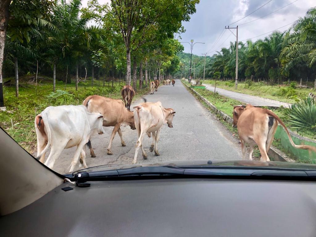 transport-sumatra-2
