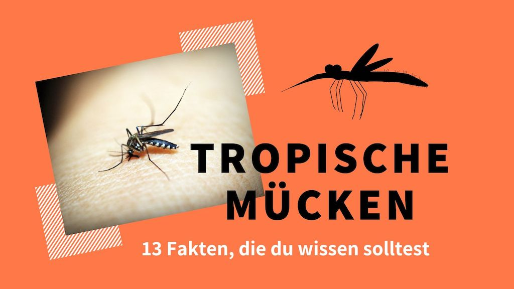 tropische-muecken-titelbild