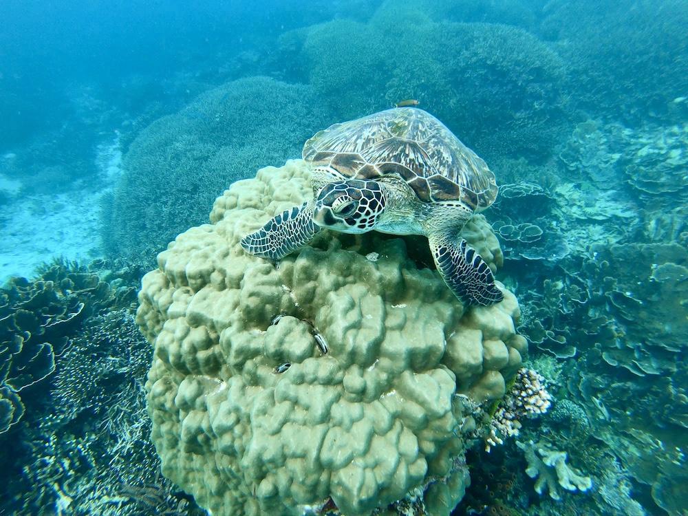 turtle-point-besondere-orte-flores-1