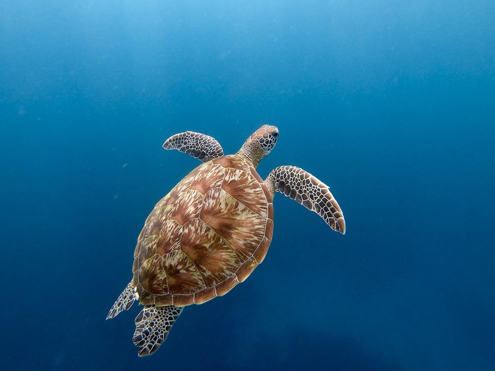 turtle-point-besondere-orte-flores-2